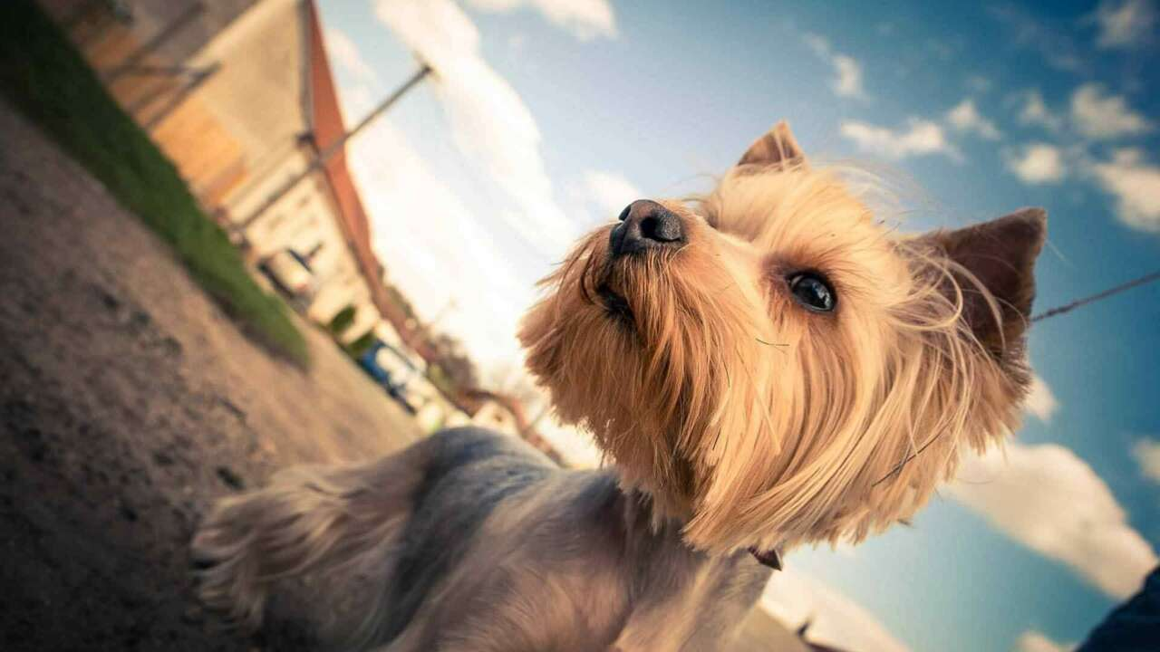 Lulu – A Therapy Dog, Comforts Grieving Families