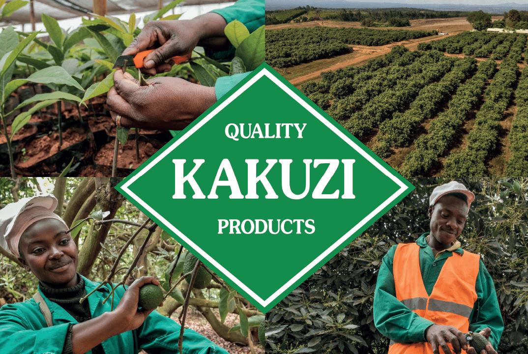 Kakuzi Affirms Supporting to Avocado Smallholder Farmers at 93rd AGM