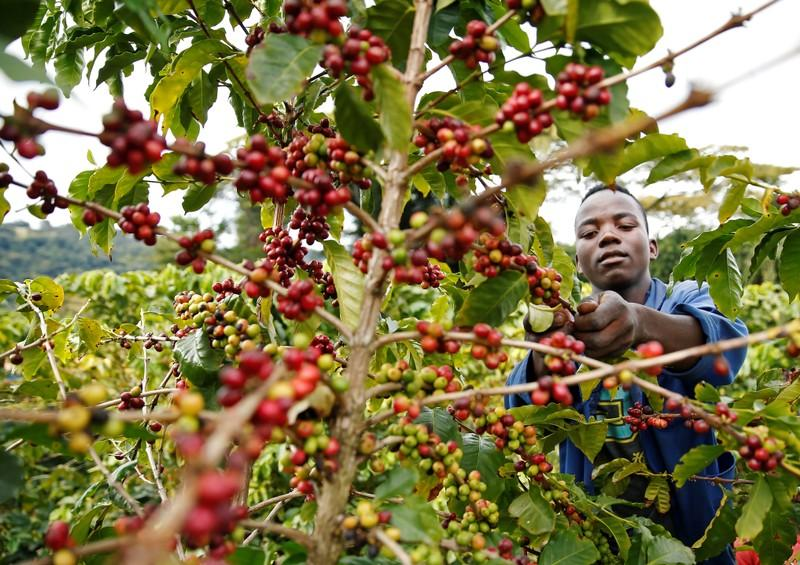Coffee Farmers Push for Reduction in Milling and Agency Fees