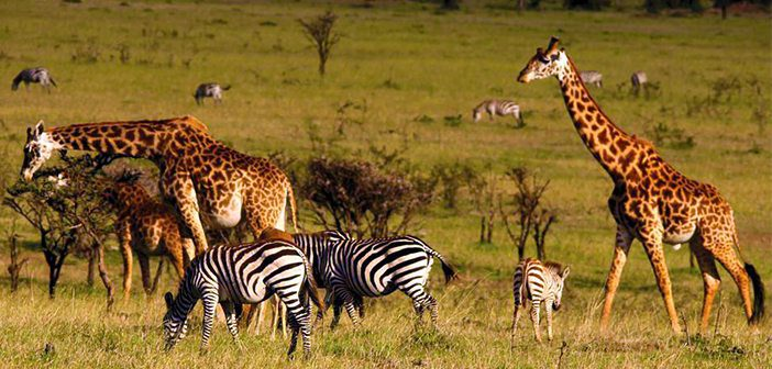 Kenya's Revenue from Tourism Drops by Over Kes 110 Billion